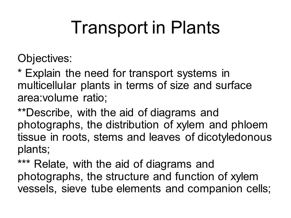 Transport in Plants Objectives: * Explain the need for transport systems in multicellular plants in terms of size and surface area:volume ratio; **Des