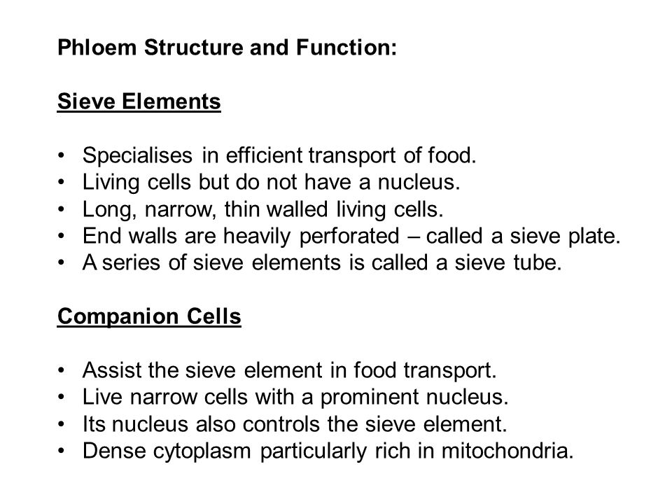 Phloem Structure and Function: Sieve Elements Specialises in efficient transport of food. Living cells but do not have a nucleus. Long, narrow, thin w