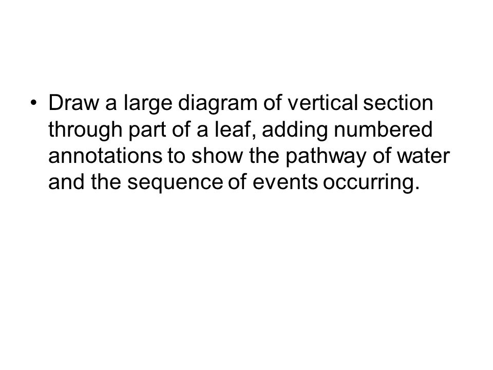 Draw a large diagram of vertical section through part of a leaf, adding numbered annotations to show the pathway of water and the sequence of events o