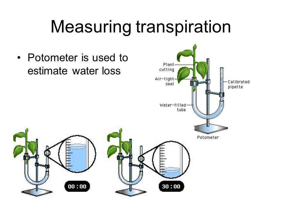 Measuring transpiration Potometer is used to estimate water loss