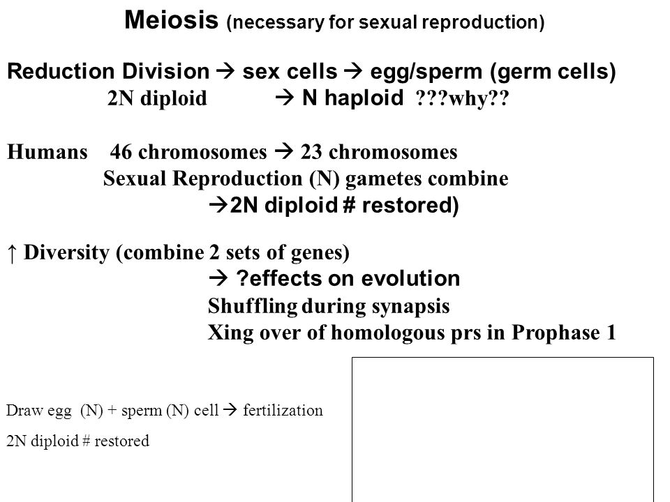 Meiosis # of chromosomes is cut in 1/2 thru separation of homologous chromosomes in a diploid 2N cell 2N diploid cell contains 2 complete sets of chromosomes (1 set of chromosomes/genes from each parent) Mendel: All of an organisms cells except gametes contain 2 alleles for a trait Sex cells undergo meiosis to produce Gametes (ovum/egg and sperm) Symbols ________ ________