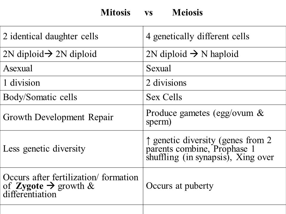 2 identical daughter cells4 genetically different cells 2N diploid 2N diploid N haploid AsexualSexual 1 division2 divisions Body/Somatic cellsSex Cell