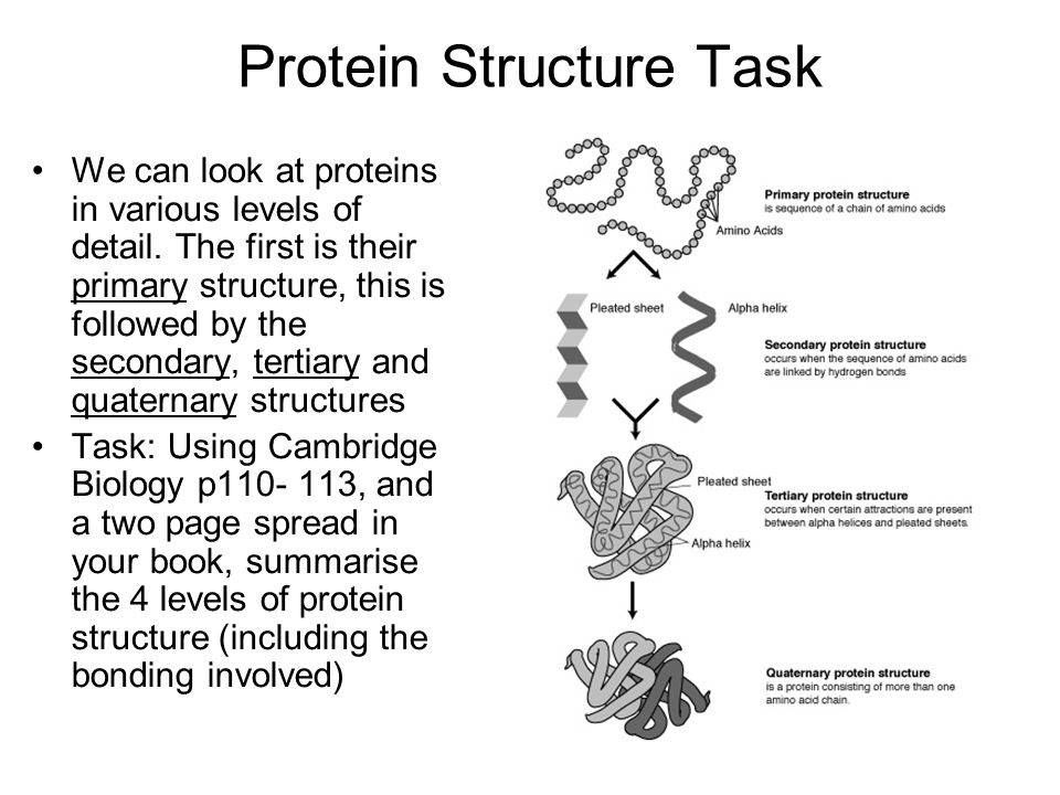 Primary Structure The sequence of amino acids that forms the protein