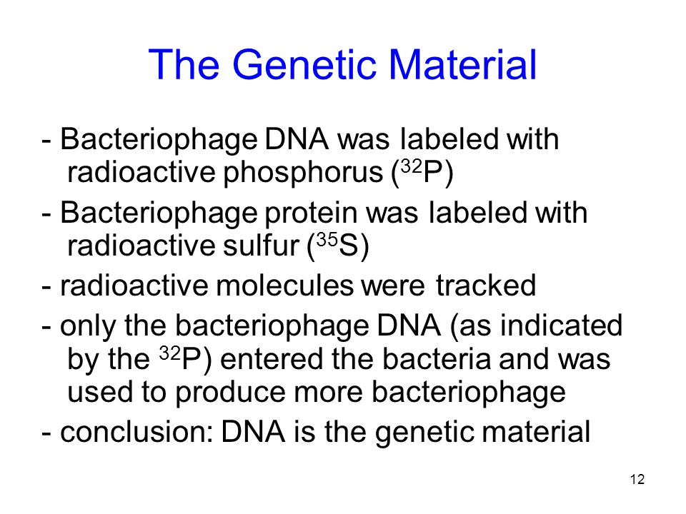 12 The Genetic Material - Bacteriophage DNA was labeled with radioactive phosphorus ( 32 P) - Bacteriophage protein was labeled with radioactive sulfu