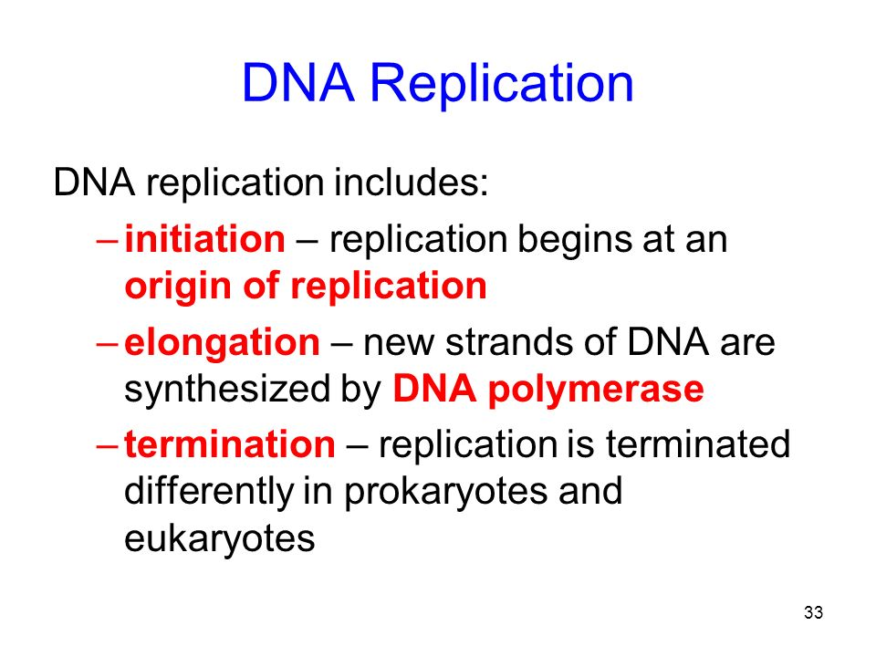 33 DNA Replication DNA replication includes: –initiation – replication begins at an origin of replication –elongation – new strands of DNA are synthes
