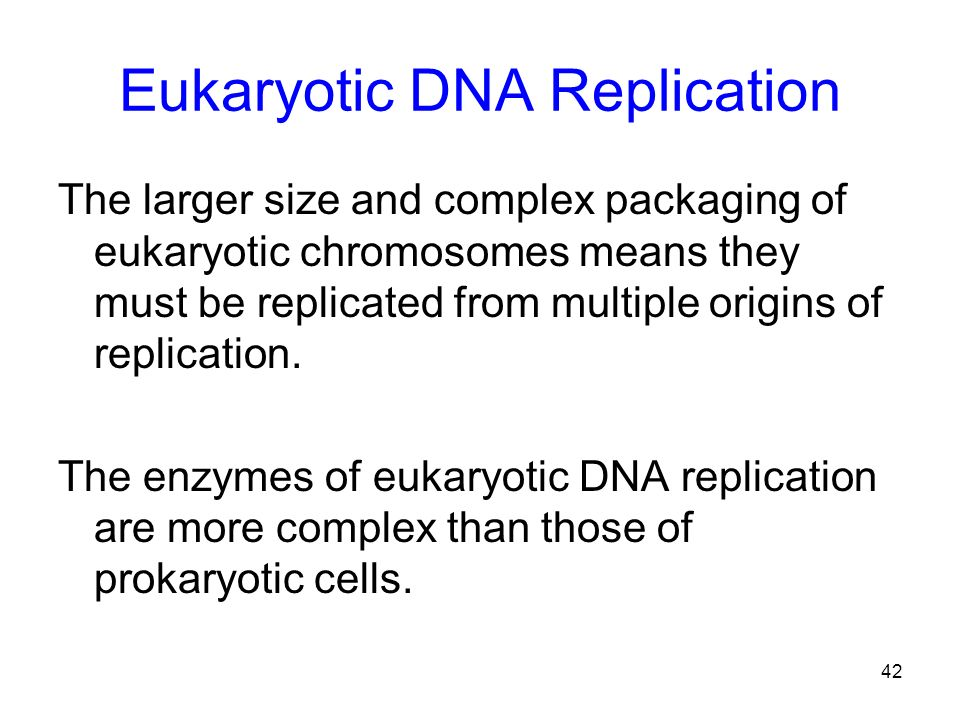 42 Eukaryotic DNA Replication The larger size and complex packaging of eukaryotic chromosomes means they must be replicated from multiple origins of r
