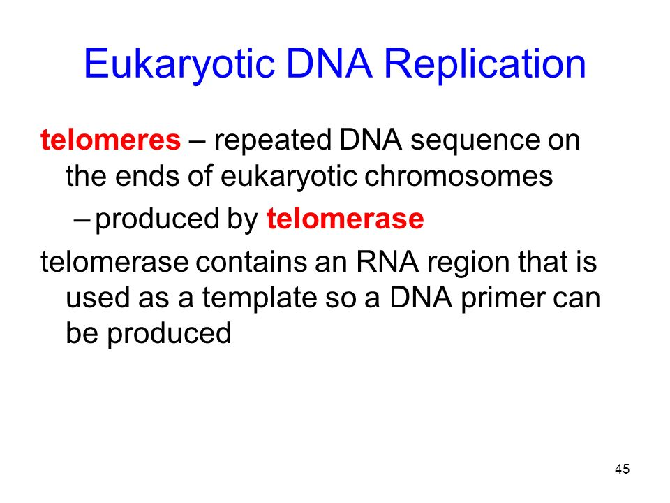 45 Eukaryotic DNA Replication telomeres – repeated DNA sequence on the ends of eukaryotic chromosomes –produced by telomerase telomerase contains an R