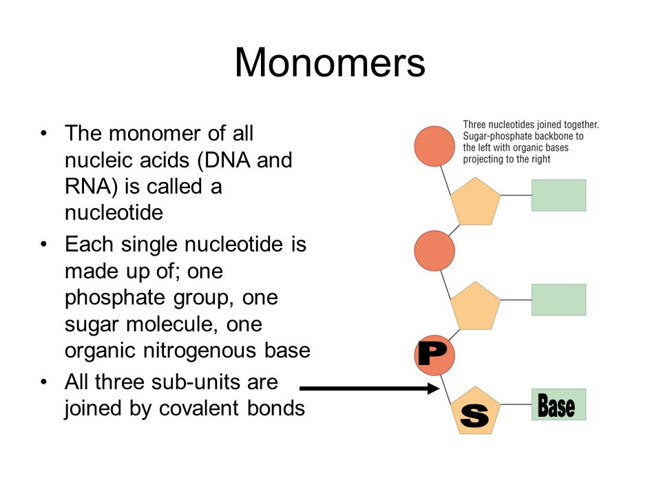 Monomers The monomer of all nucleic acids (DNA and RNA) is called a nucleotide Each single nucleotide is made up of; one phosphate group, one sugar mo