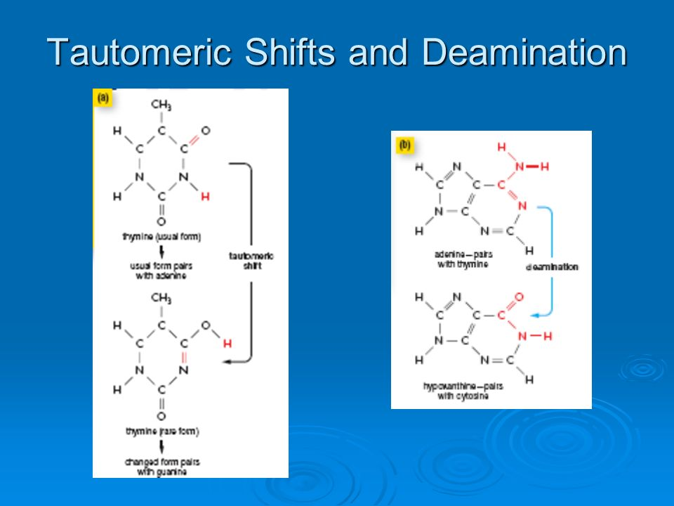 Tautomeric Shifts and Deamination