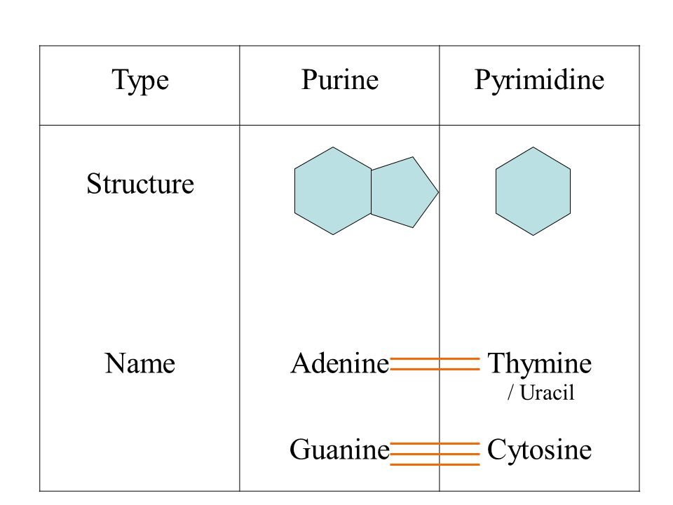 TypePurinePyrimidine Structure NameAdenine Guanine Thymine Cytosine / Uracil
