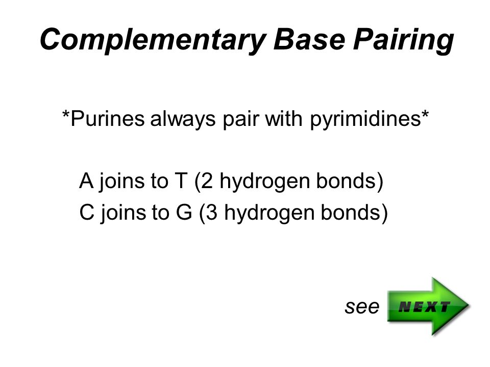 Complementary Base Pairing *Purines always pair with pyrimidines* A joins to T (2 hydrogen bonds) C joins to G (3 hydrogen bonds) see