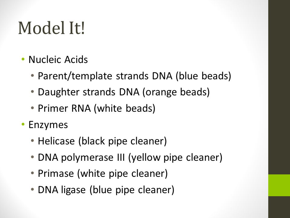 Model It! Nucleic Acids Parent/template strands DNA (blue beads) Daughter strands DNA (orange beads) Primer RNA (white beads) Enzymes Helicase (black