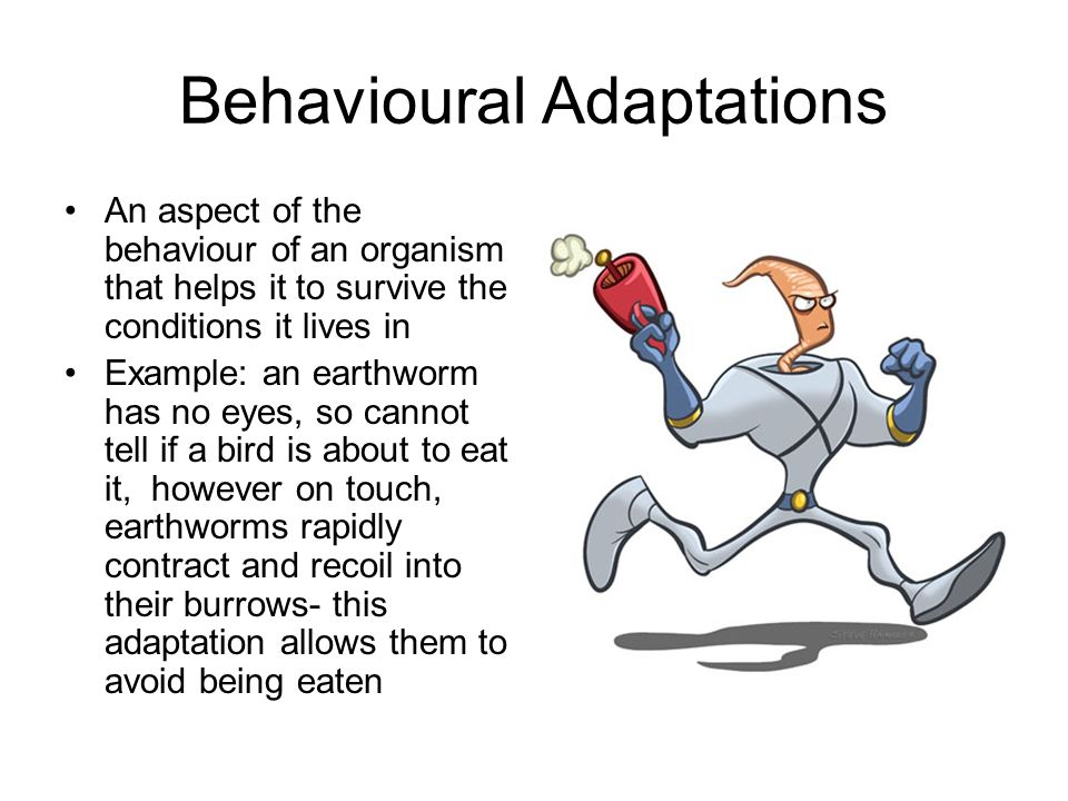 Behavioural Adaptations An aspect of the behaviour of an organism that helps it to survive the conditions it lives in Example: an earthworm has no eye