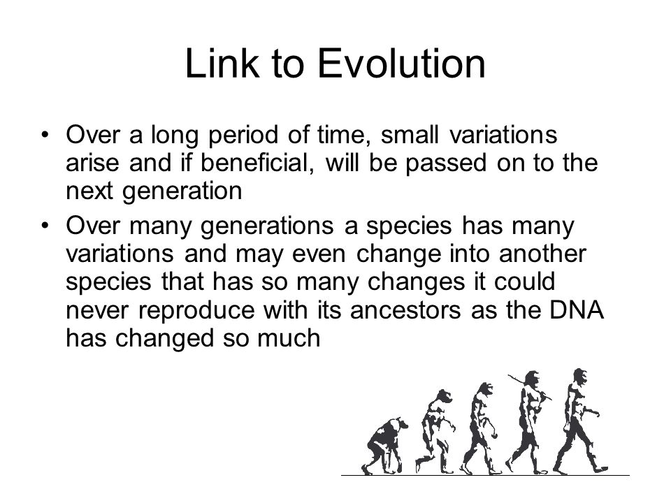 Link to Evolution Over a long period of time, small variations arise and if beneficial, will be passed on to the next generation Over many generations