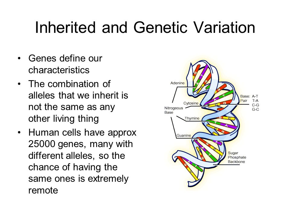 Inherited and Genetic Variation Genes define our characteristics The combination of alleles that we inherit is not the same as any other living thing