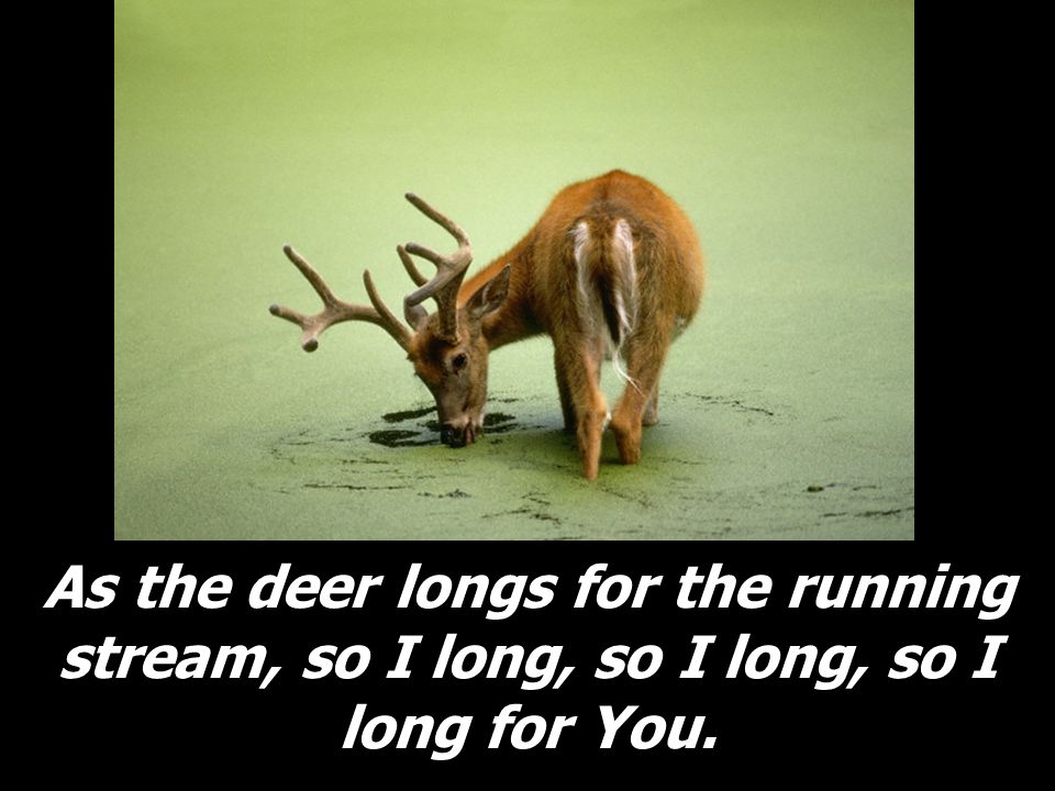 As the deer longs for the running stream, so I long, so I long, so I long for You.