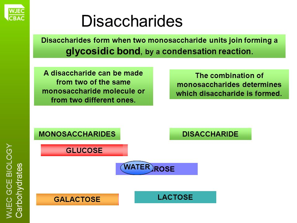 WJEC GCE BIOLOGY Carbohydrates GLUCOSE MALTOSESUCROSE GLUCOSE Disaccharides A disaccharide can be made from two of the same monosaccharide molecule or