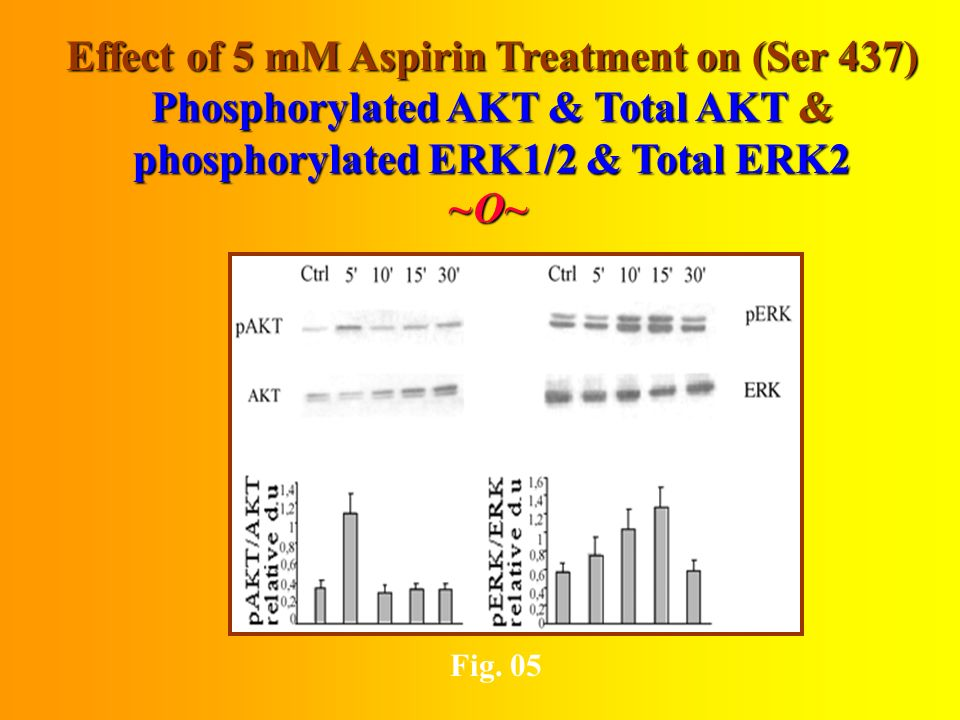 Effect of 2 & 5 mM AspirinTreatment on PI3- kinase Activity in 96-h Serum-Starved Cells ~O~~O~~O~~O~ Fig.