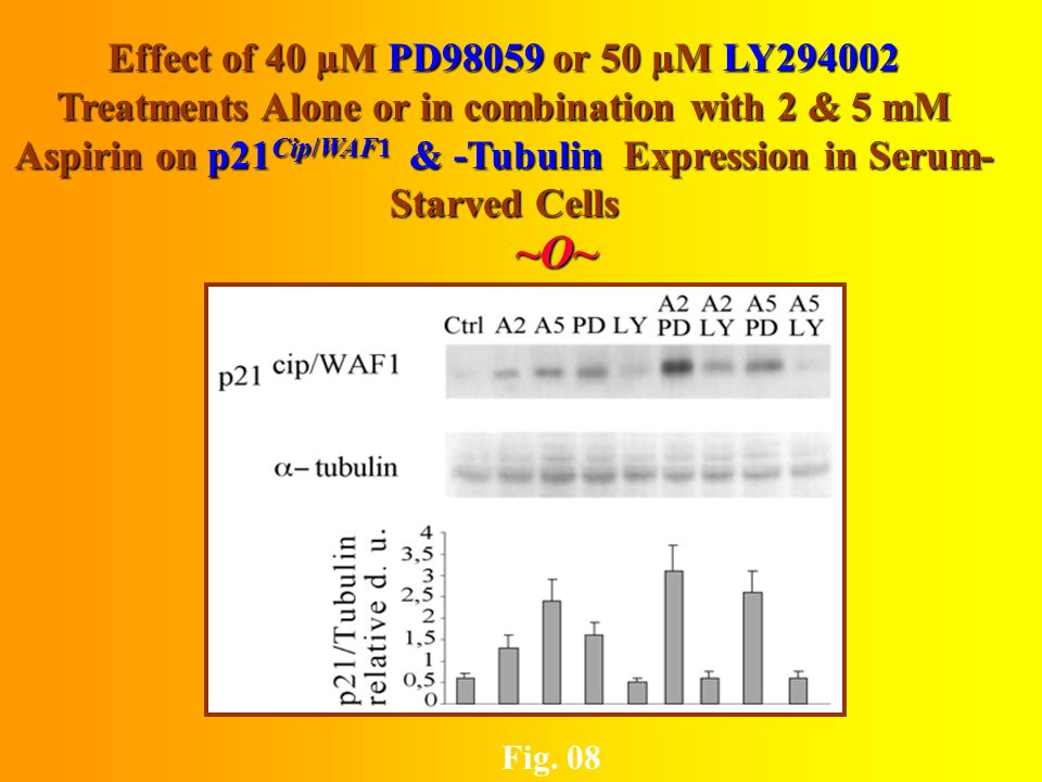 Effect of Aspirin & Vp-16 Treatments on the phosphorylation Status of AKT Protein ~O~~O~~O~~O~ Fig.