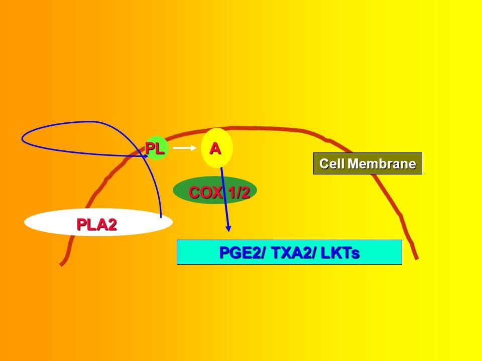 P. Ricchi et al, Molecular Pharmacology, 64, 2003 Ashim Malhotra November 11, 2003 Cell Signaling