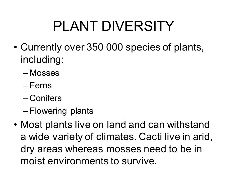 PLANT DIVERSITY Currently over 350 000 species of plants, including: –Mosses –Ferns –Conifers –Flowering plants Most plants live on land and can withs