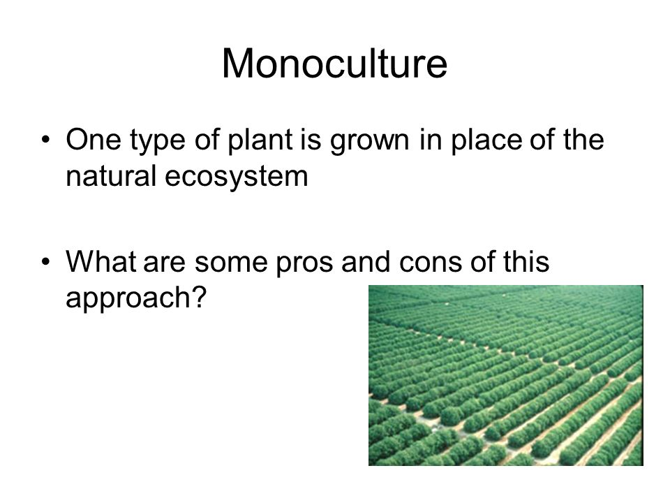 Monoculture One type of plant is grown in place of the natural ecosystem What are some pros and cons of this approach?
