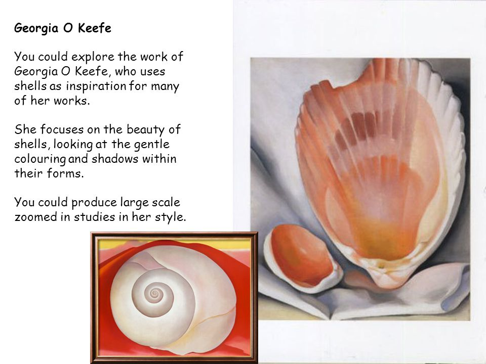 Georgia O Keefe You could explore the work of Georgia O Keefe, who uses shells as inspiration for many of her works.