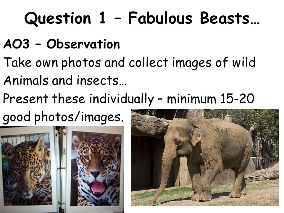 Question 1 – Fabulous Beasts… AO3 – Observation Create realistic sketches (quick and various scales) from your photos and first hand… Mount these on large sheets of mountboard and through your sketchbook – aim for 6-8 small loose studies and approx 4 sketchbook pages.