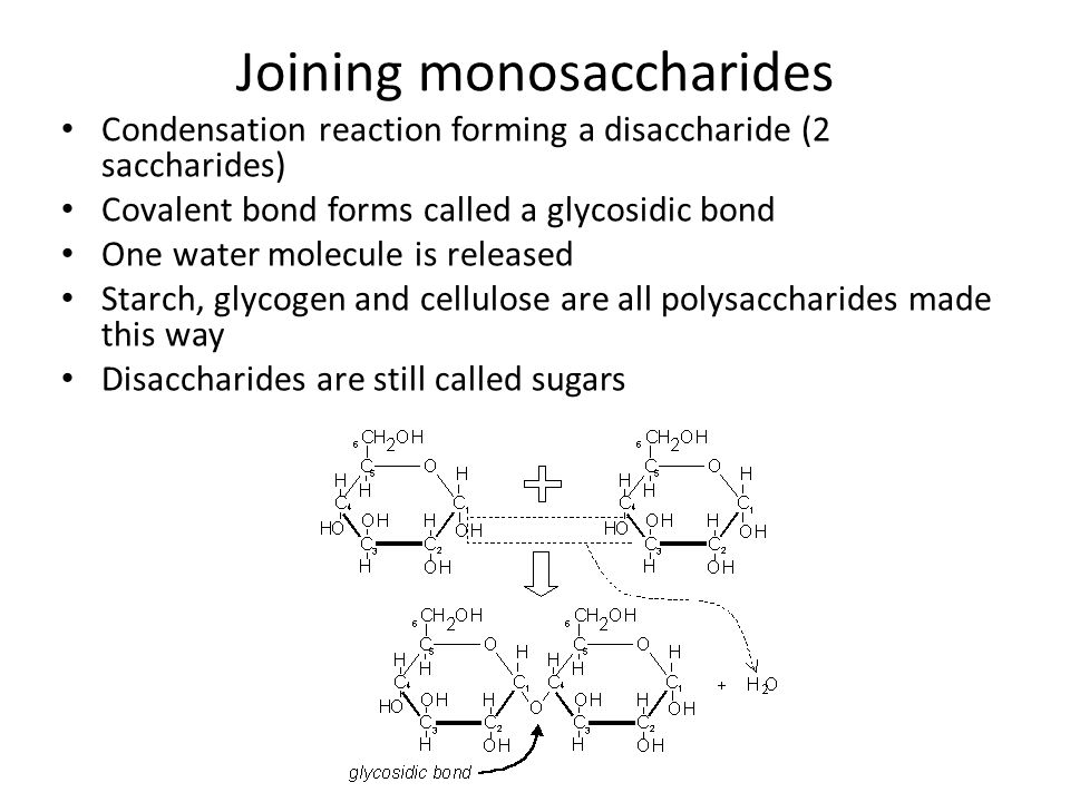 Joining monosaccharides Condensation reaction forming a disaccharide (2 saccharides) Covalent bond forms called a glycosidic bond One water molecule i