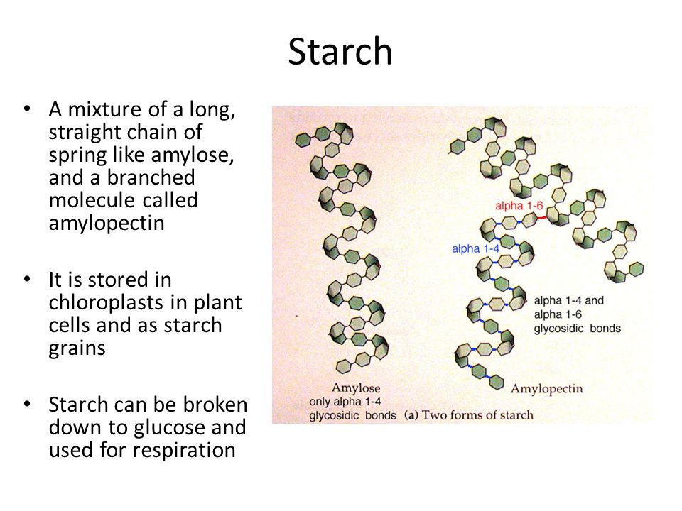 Starch A mixture of a long, straight chain of spring like amylose, and a branched molecule called amylopectin It is stored in chloroplasts in plant ce