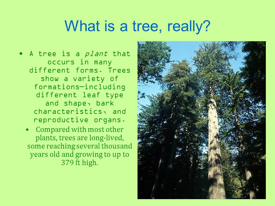 What is a tree, really? A tree is a plant that occurs in many different forms. Trees show a variety of formationsincluding different leaf type and sha