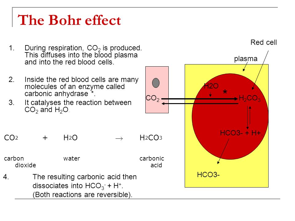 The Bohr effect (continued) 5.Haemoglobin very readily combines with hydrogen ions forming haemoglobinic acid.