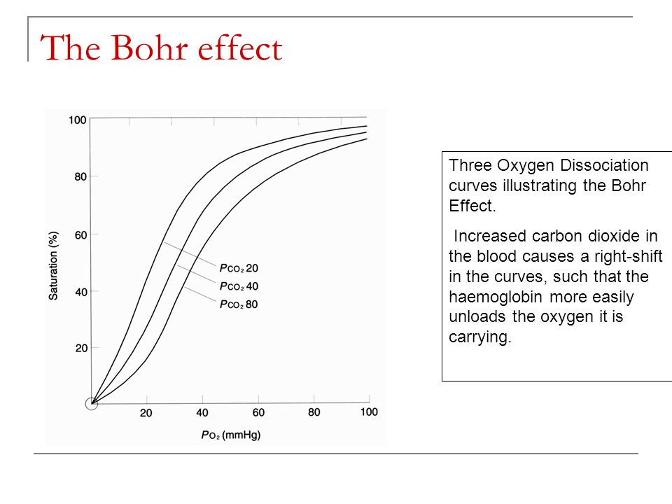 Why is the Bohr effect useful.