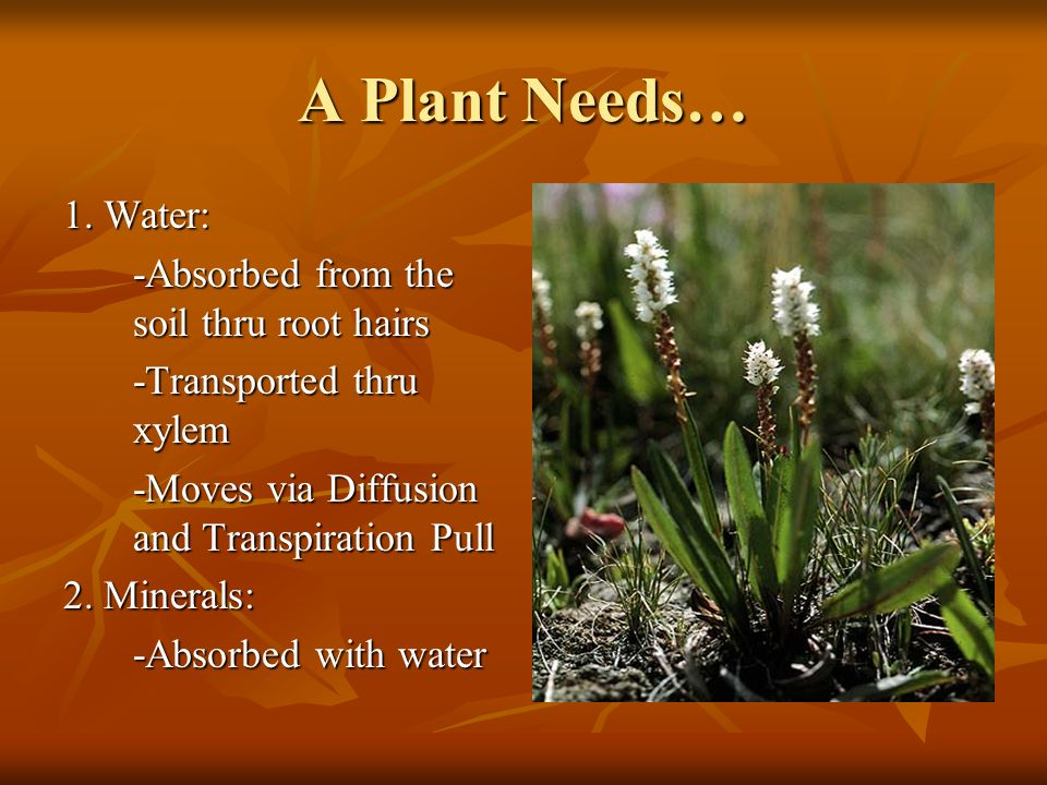 A Plant Needs… 1.