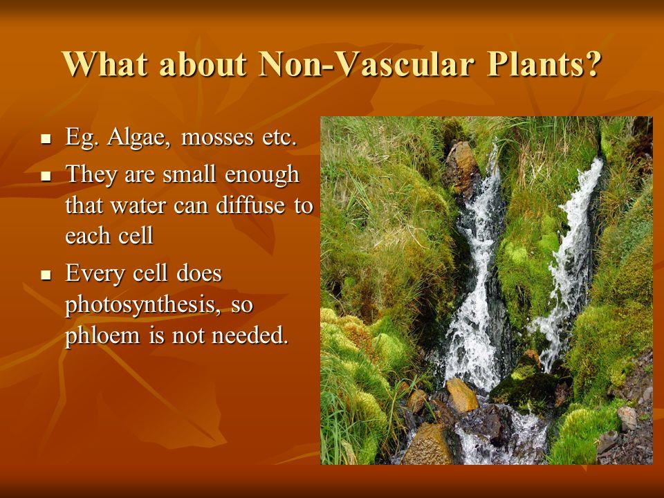 Fluid Movement in Plants