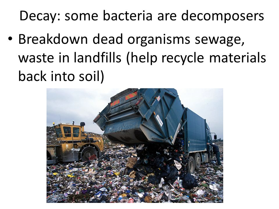 Decay: some bacteria are decomposers Breakdown dead organisms sewage, waste in landfills (help recycle materials back into soil)