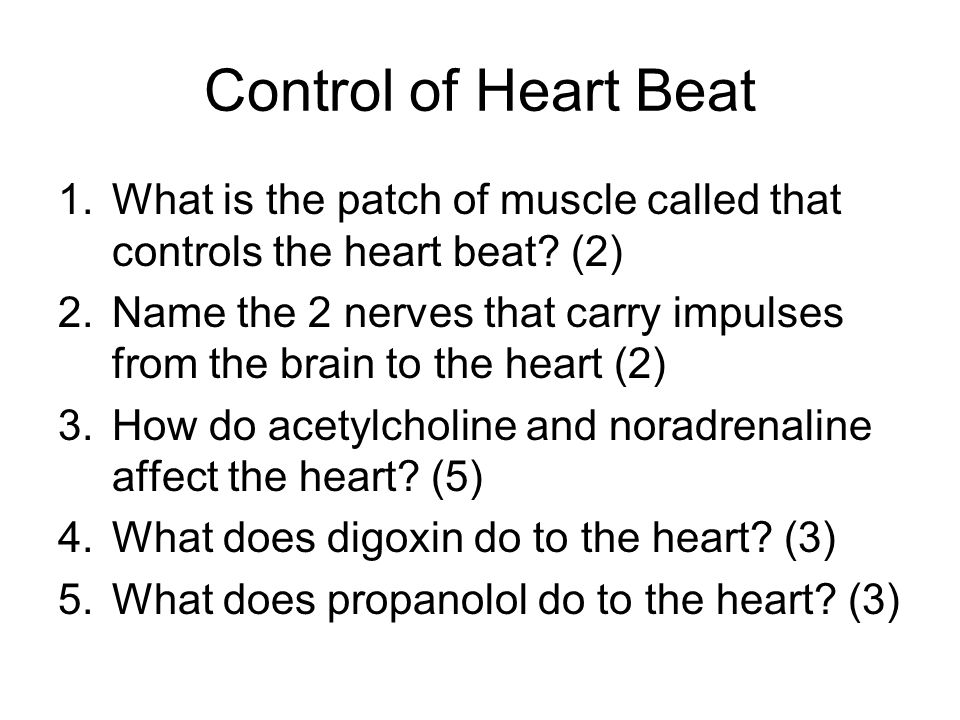 Control of Heart Beat 1.What is the patch of muscle called that controls the heart beat? (2) 2.Name the 2 nerves that carry impulses from the brain to