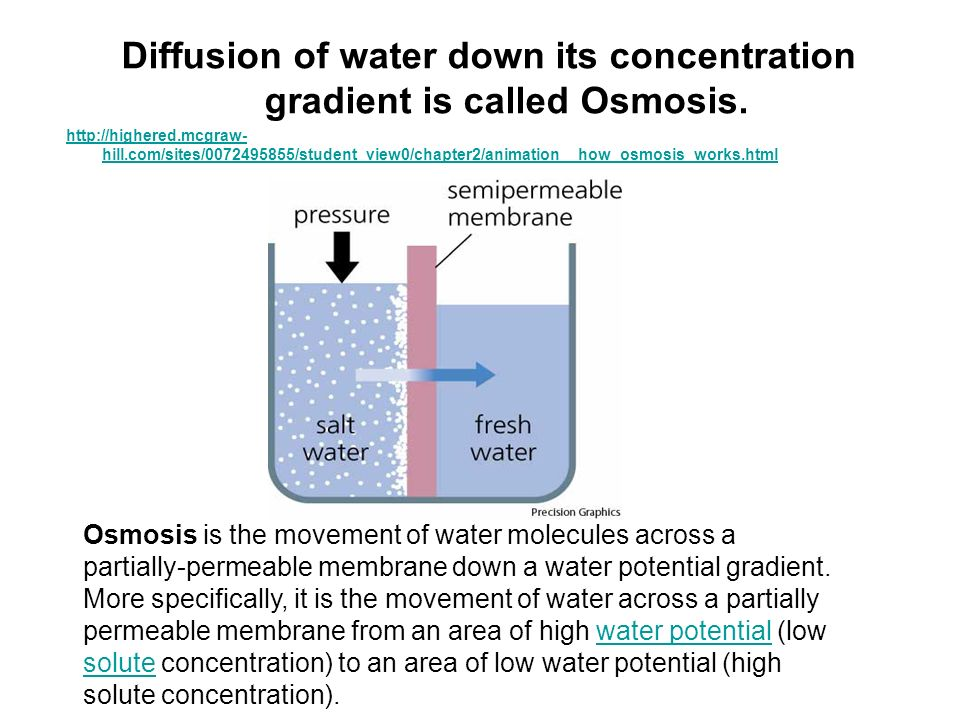 Diffusion of water down its concentration gradient is called Osmosis.