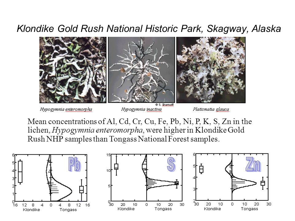 Klondike Gold Rush National Historic Park, Skagway, Alaska Mean concentrations of Al, Cd, Cr, Cu, Fe, Pb, Ni, P, K, S, Zn in the lichen, Hypogymnia enteromorpha, were higher in Klondike Gold Rush NHP samples than Tongass National Forest samples.