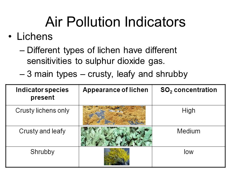 Air Pollution Indicators Lichens –Different types of lichen have different sensitivities to sulphur dioxide gas. –3 main types – crusty, leafy and shr
