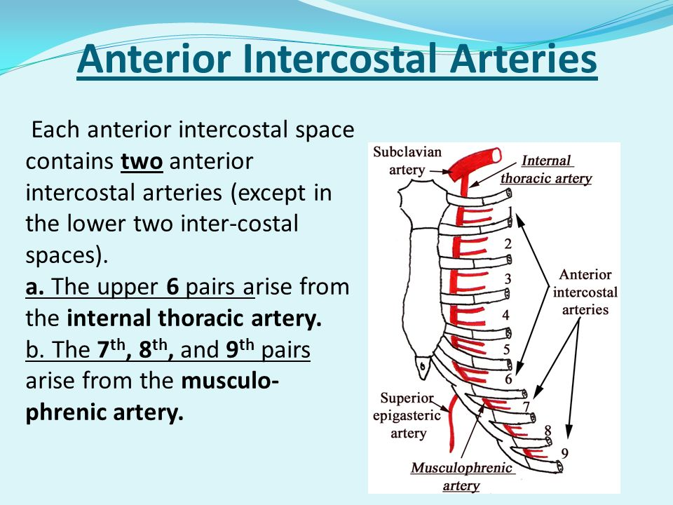 Anterior Intercostal Arteries Each anterior intercostal space contains two anterior intercostal arteries (except in the lower two inter-costal spaces)