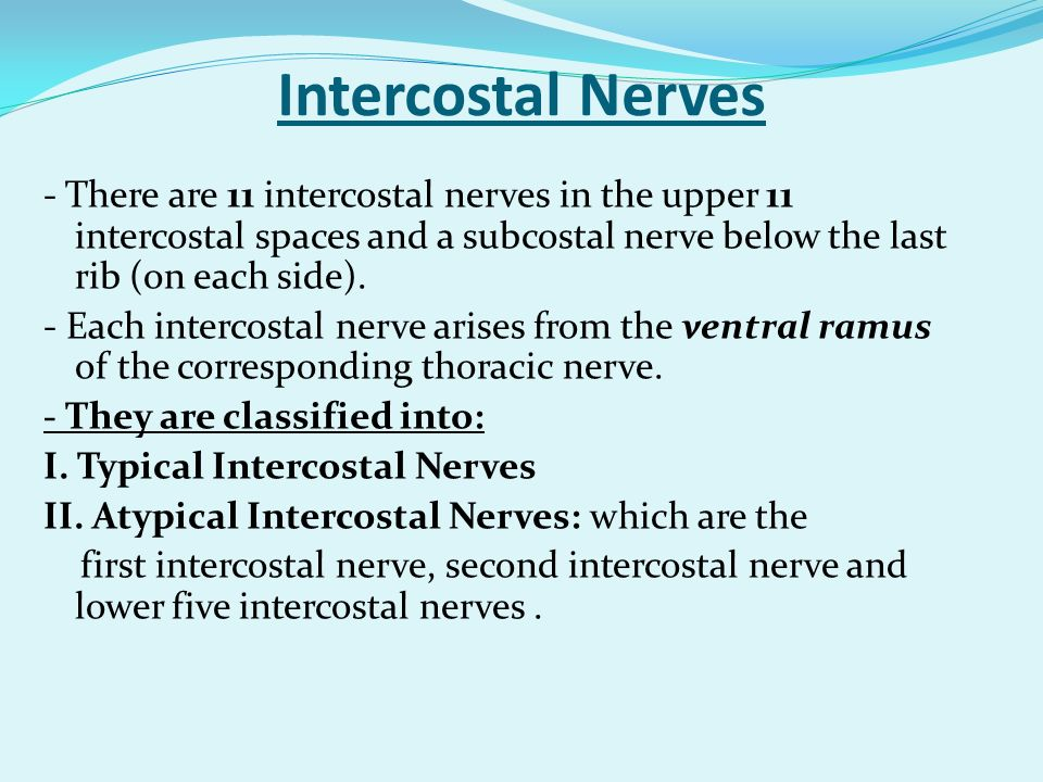 Intercostal Nerves - There are 11 intercostal nerves in the upper 11 intercostal spaces and a subcostal nerve below the last rib (on each side). - Eac