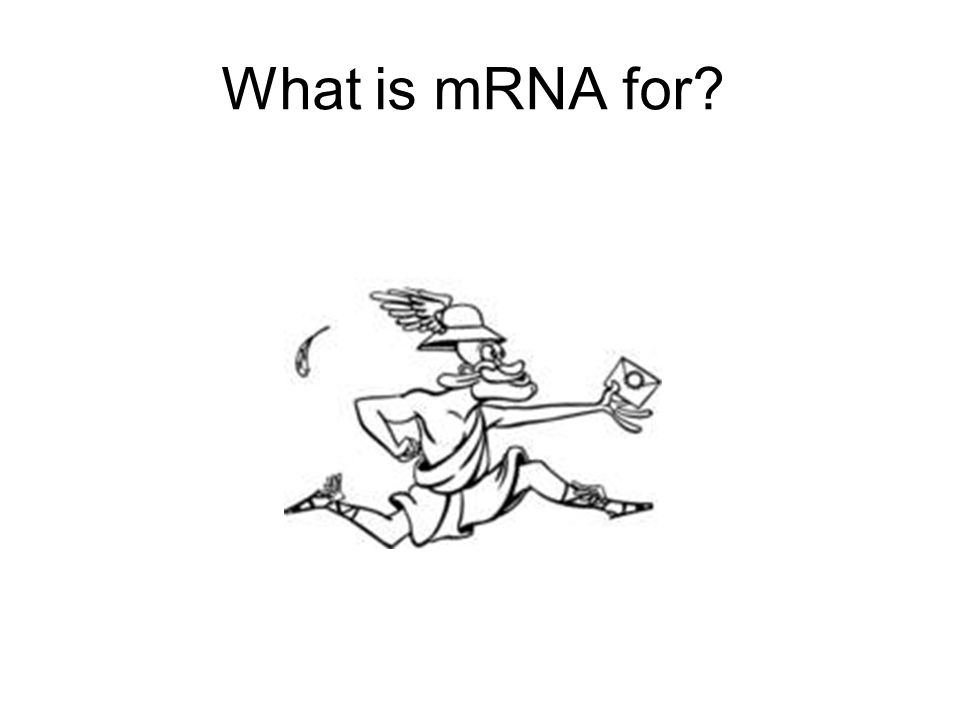 What is mRNA for?