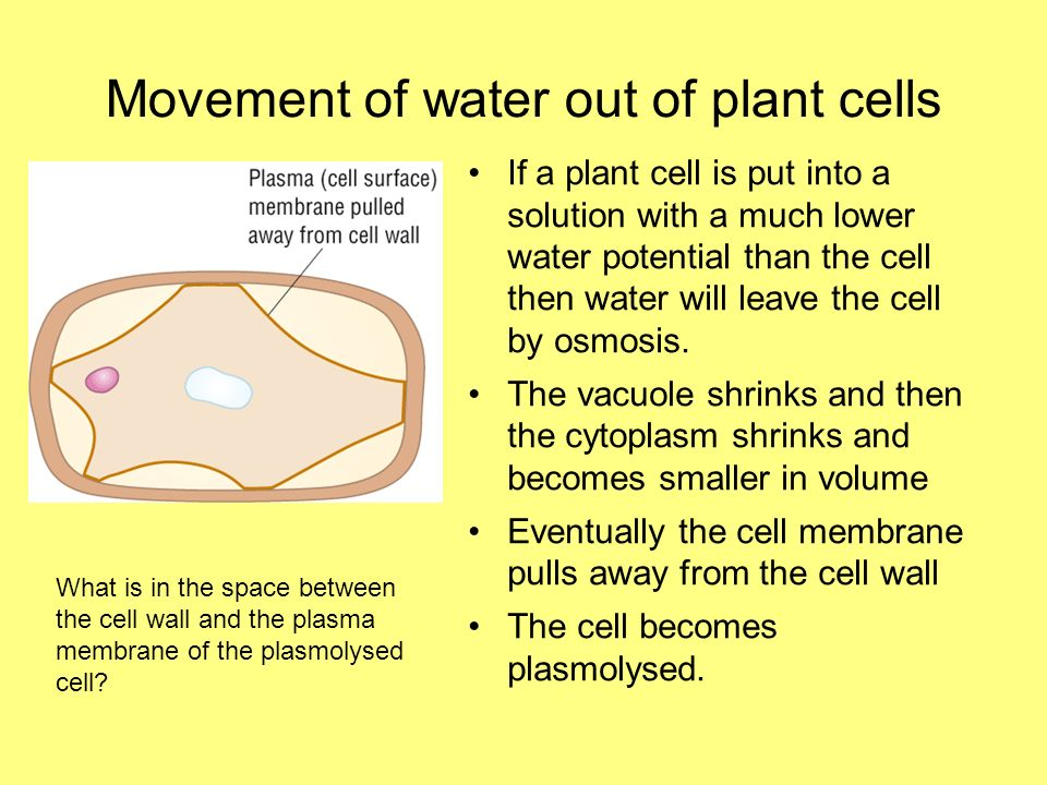 Movement of water out of plant cells If a plant cell is put into a solution with a much lower water potential than the cell then water will leave the cell by osmosis.