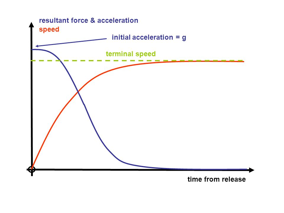 speed time from release terminal speed initial acceleration = g resultant force & acceleration