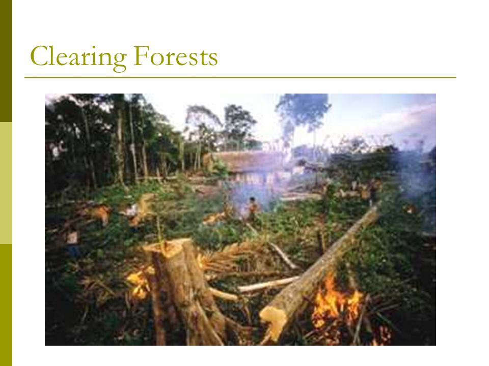 Clearing Forests