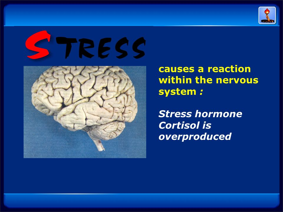 causes a reaction within the nervous system : Stress hormone Cortisol is overproduced