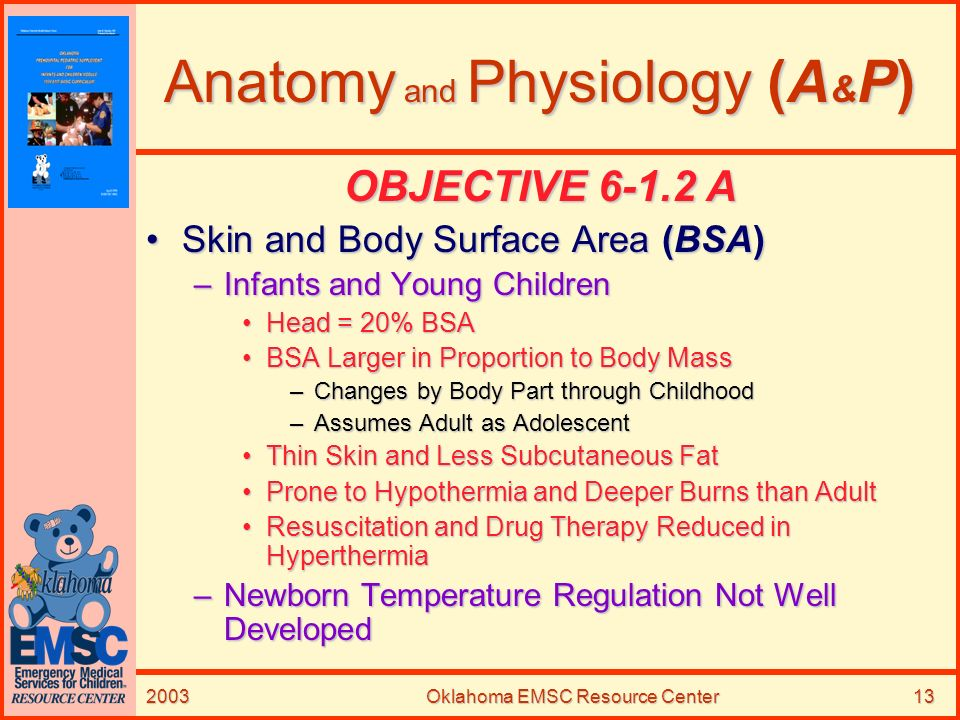 2003Oklahoma EMSC Resource Center13 Anatomy and Physiology (A & P) OBJECTIVE 6-1.2 A Skin and Body Surface Area (BSA)Skin and Body Surface Area (BSA)
