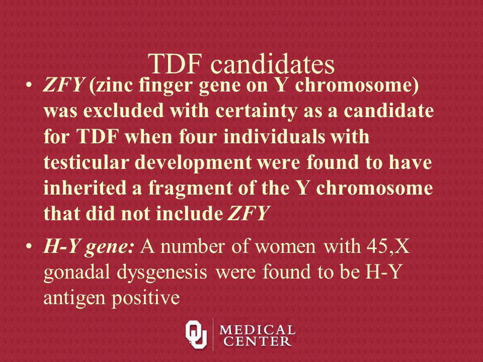TDF candidates ZFY (zinc finger gene on Y chromosome) was excluded with certainty as a candidate for TDF when four individuals with testicular develop