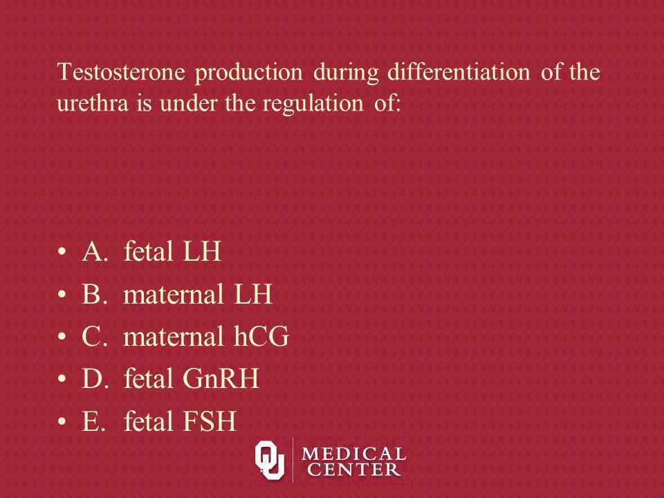 Testosterone production during differentiation of the urethra is under the regulation of: A.fetal LH B.maternal LH C.maternal hCG D.fetal GnRH E.fetal